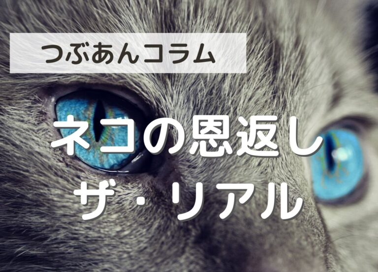 ネコの恩返し ザ・リアル
